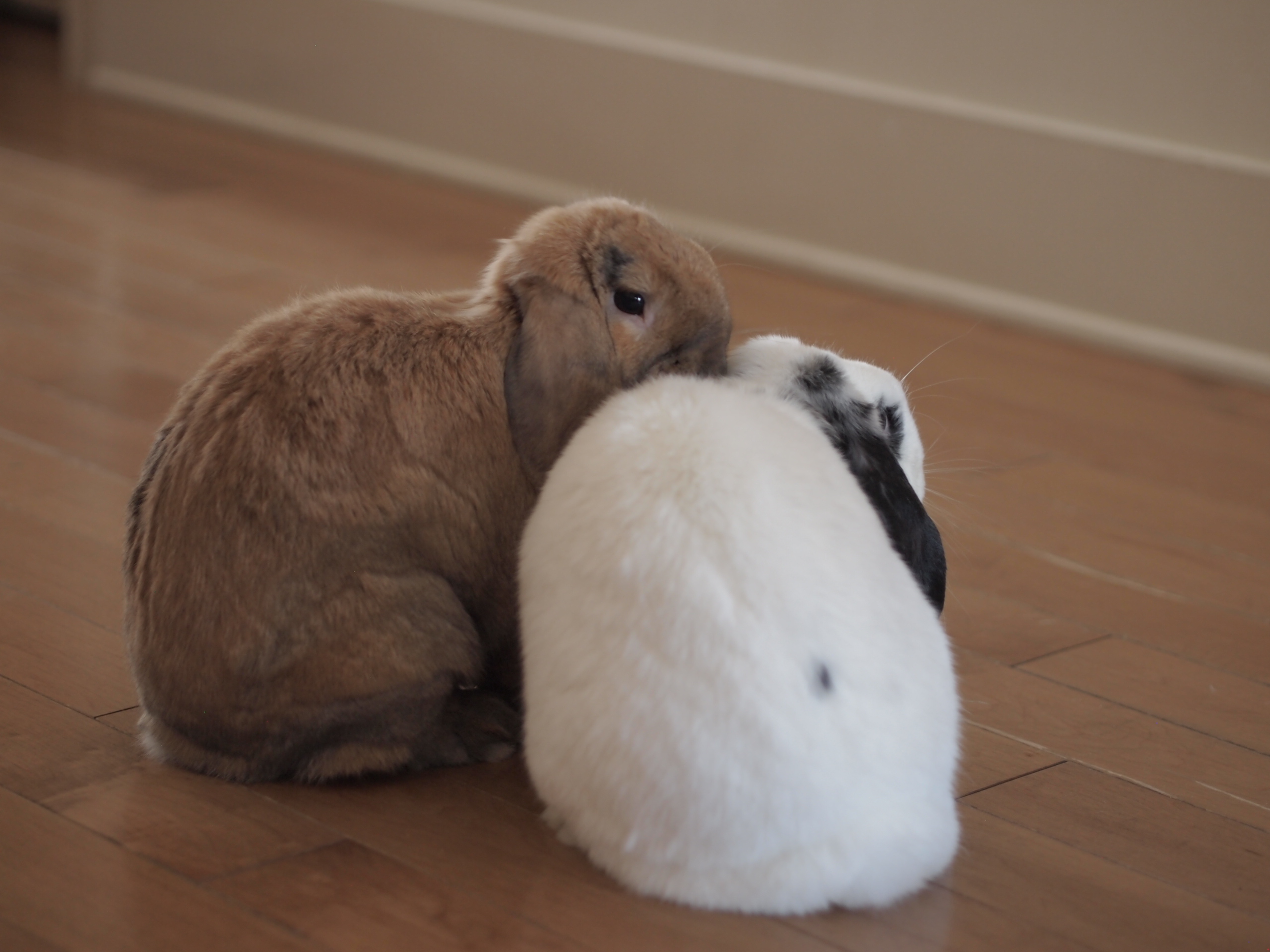 Why I Adopted Rabbits – Facing Gain in Loss