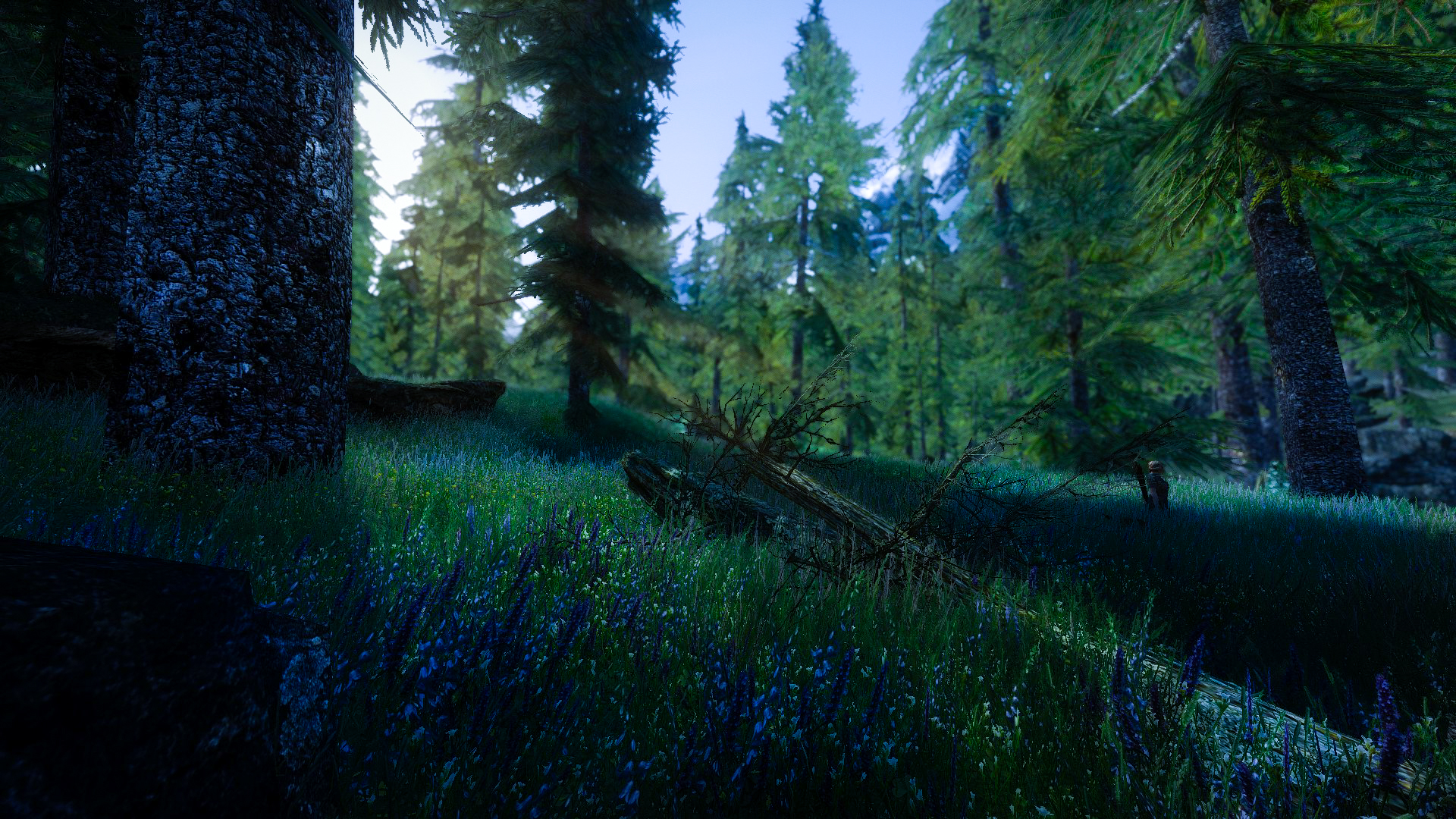 Falkreath Woods